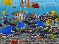 3D Fish School Screensaver 4.994 screenshot. Click to enlarge!