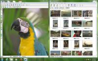 Ai Picture Explorer 8.5.0.8500 screenshot. Click to enlarge!