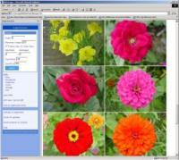 ImageExtractor 2003.10 screenshot. Click to enlarge!