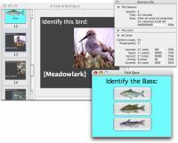 Studycard Studio Lite 2.5 screenshot. Click to enlarge!
